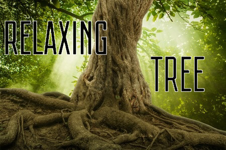 Large, strong tree in a relaxing forest for stress relief hypnosis